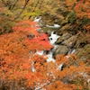 『紅葉×渓流』