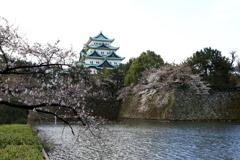 『名古屋城×桜』