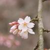 『桜咲く^^』