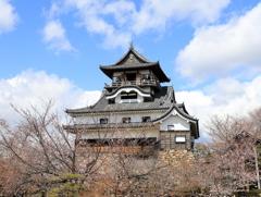 『犬山城×桜、、、』