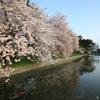『桜×咲』