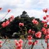 『犬山城×桜』