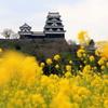 『大洲城×菜の花』