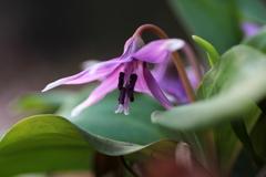 『紫×花×咲』
