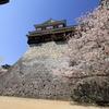 『松山城×桜×青空』