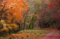 晩秋の散歩