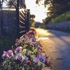 Roadside flower bed