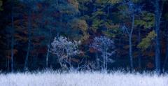 White Trees ~冬の精~