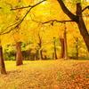 秋色の佳日
