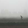 散歩に霧中