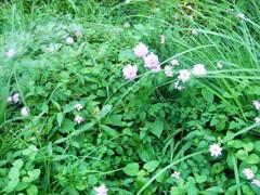 出口付近の花