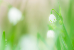 春 灯(はるあかり)