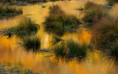 Orange Creek