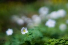 Smile Spring(春の笑顔)