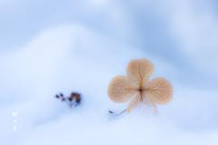 雪の優しさ