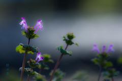 春光浴(春の光浴びて)