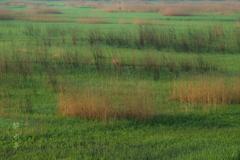 目覚める草原