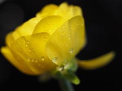 ベランダのお花 黄