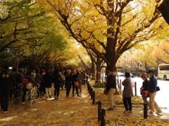神宮の森 イチョウ並木