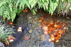 用水も秋模様