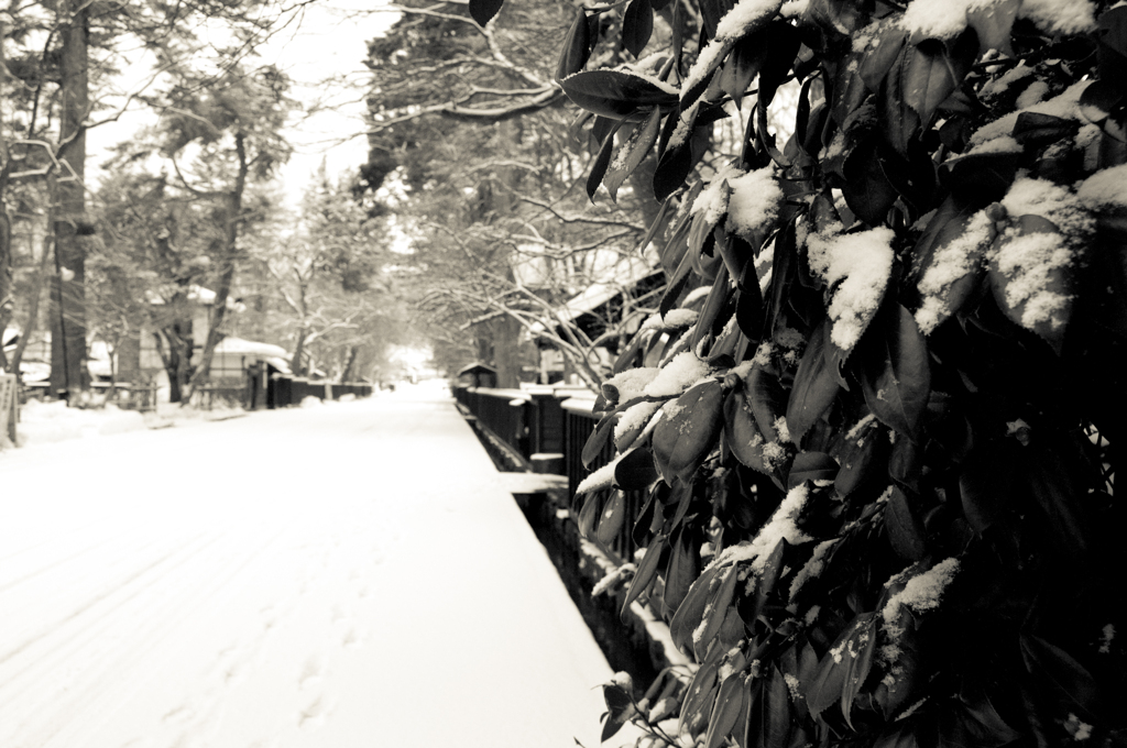 朝、雪、寒い