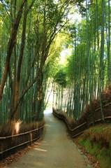 時間の感覚を忘れる竹林