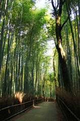 ゆっくり歩く無人の竹林路