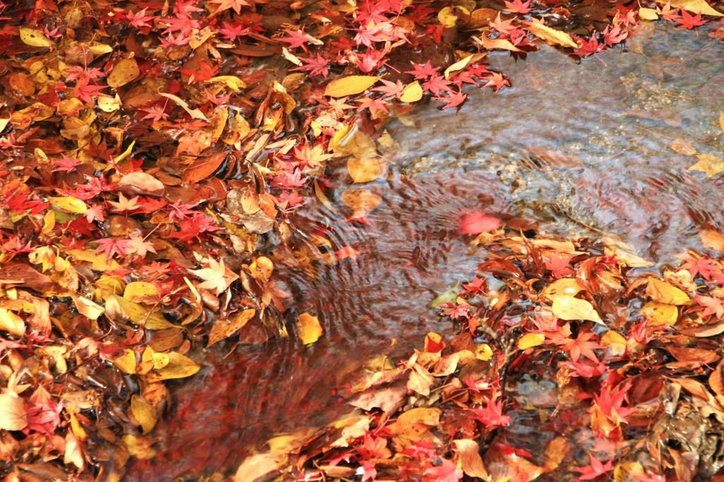 落葉の流れ