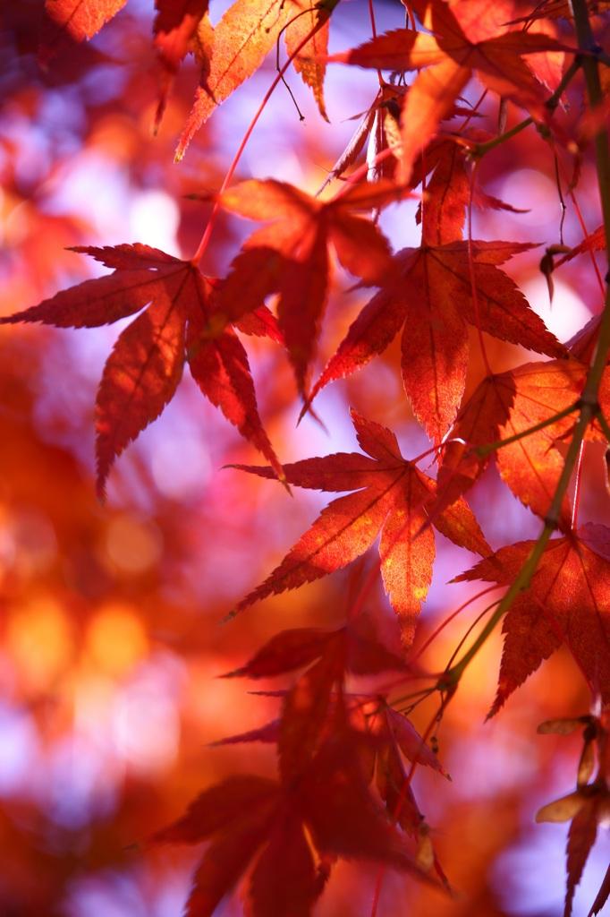 身近な秋色