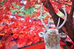 鹿さんと紅葉
