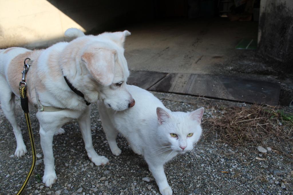 16歳、野良猫と戯れる?