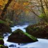 autumn stream3