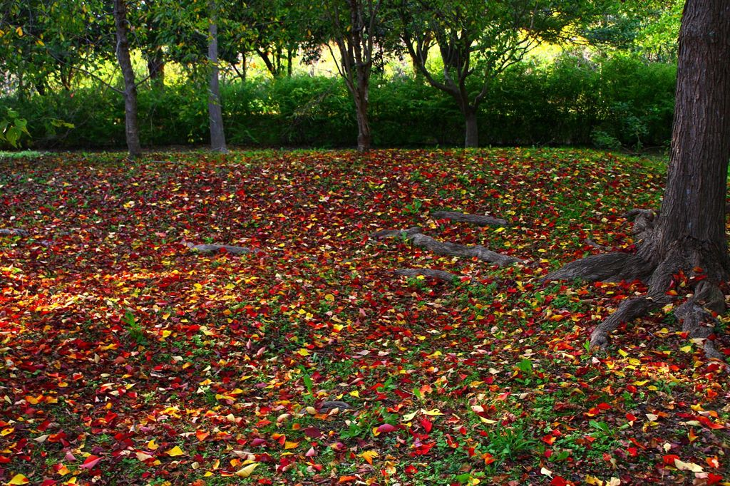 公園も 秋