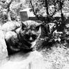江ノ島まどろみ猫