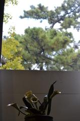 窓からの景色と陶芸作品