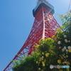 東京タワーと薔薇