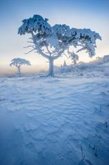 茶臼山の樹氷と朝日