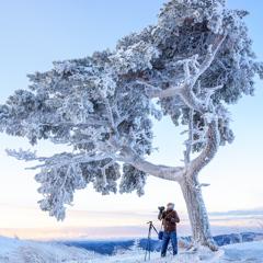 寒さに微動だにしない木々