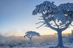 茶臼山の樹氷