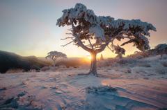 茶臼山の樹氷と日の出