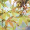 ある秋の雨の日