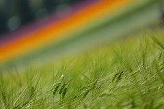 大地に咲く虹