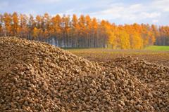 晩秋の収穫
