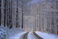 冬の煌めき