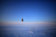 真冬の思い出