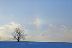 虹かと思った
