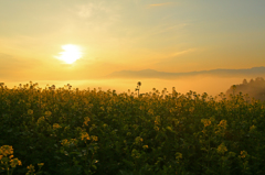 Yellow Morning