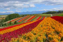 色とりどりの丘