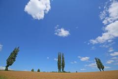 ポプラの夏