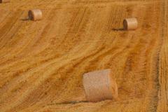 収穫後の大地